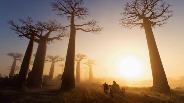 Дешевые авиабилеты на Мадагаскар, в Антананариву